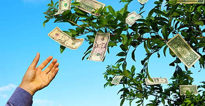 cum să faci bani în tropic