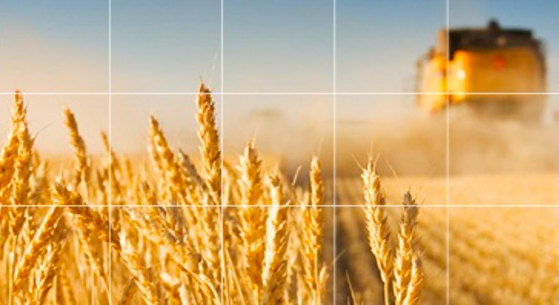 Cum te protejezi de fluctuaţiile preţului cerealelor
