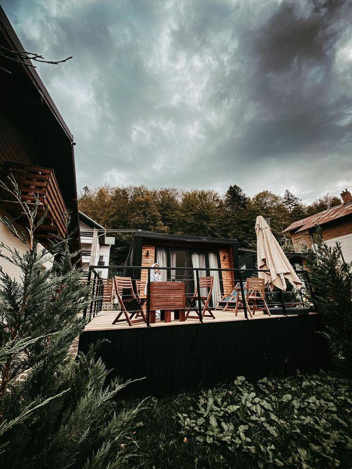 LIVE | Casa Pariurilor - Pariuri Online